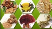 منتدى الطب العربي والتداوي بالأعشاب