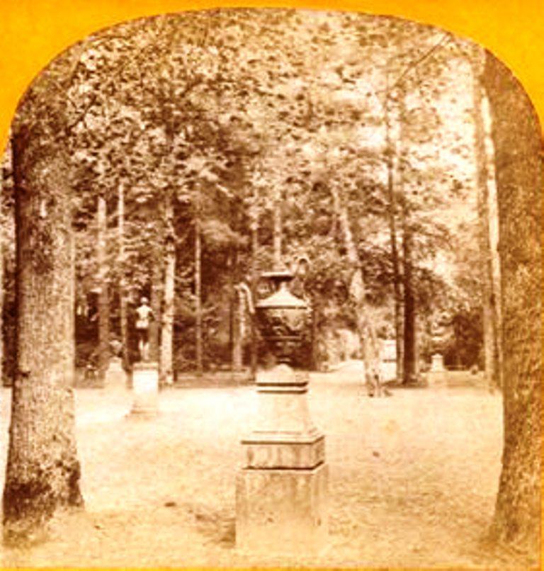 bosque11.jpg