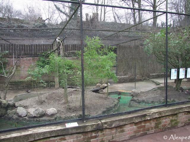 Carnet de voyage 2011 zoo de lille for Zoo exterieur