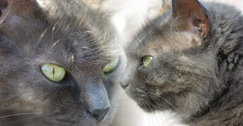 Chatte chat poupées se battent