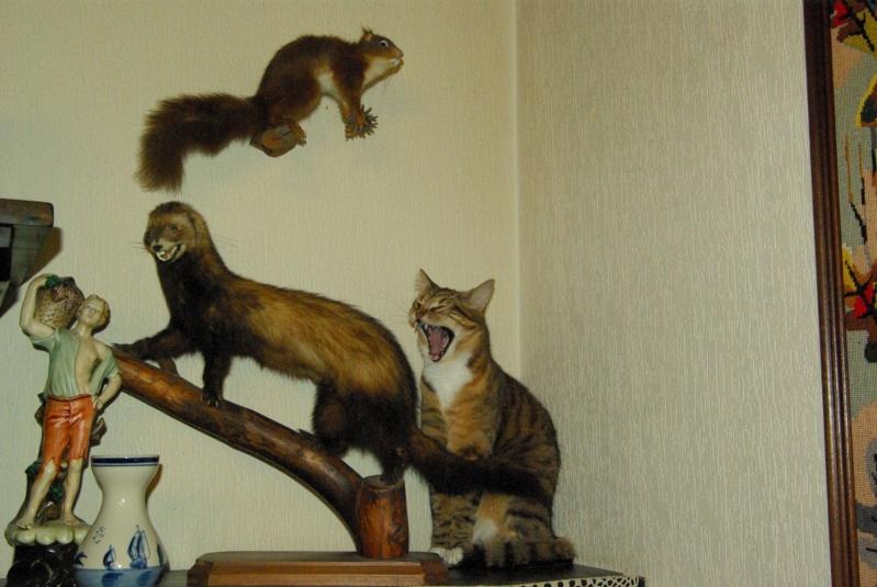 Le chat et la poupe Erena Ichinose official website