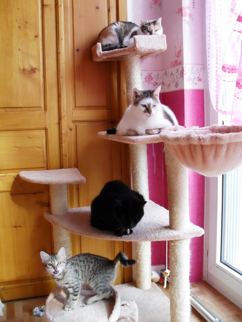 besoin d 39 avis sur les arbres chat vidaxl. Black Bedroom Furniture Sets. Home Design Ideas