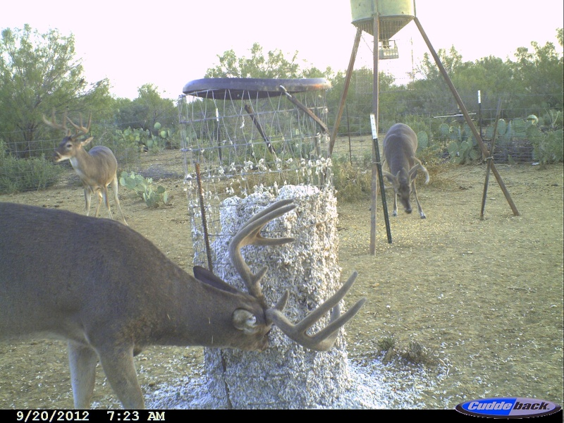 feeders sport for duty deer in sale tripod san texas heavy antonio feeder americanlisted