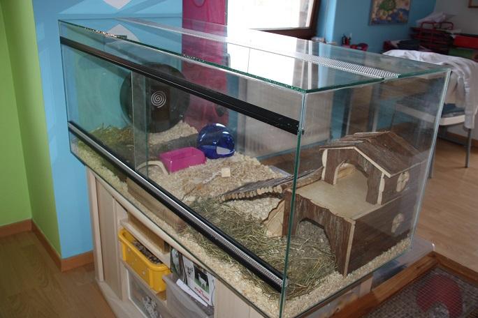 t les cages de mes hamsters