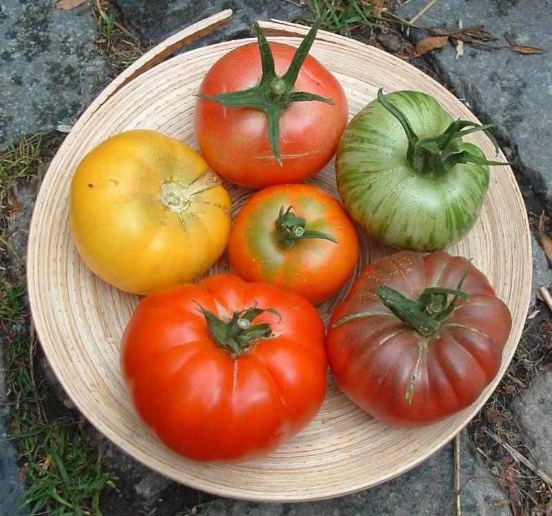 Echanges graines de tomates - Comment recuperer des graines de tomates ...