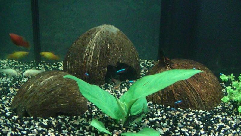 déco aquarium noix de coco