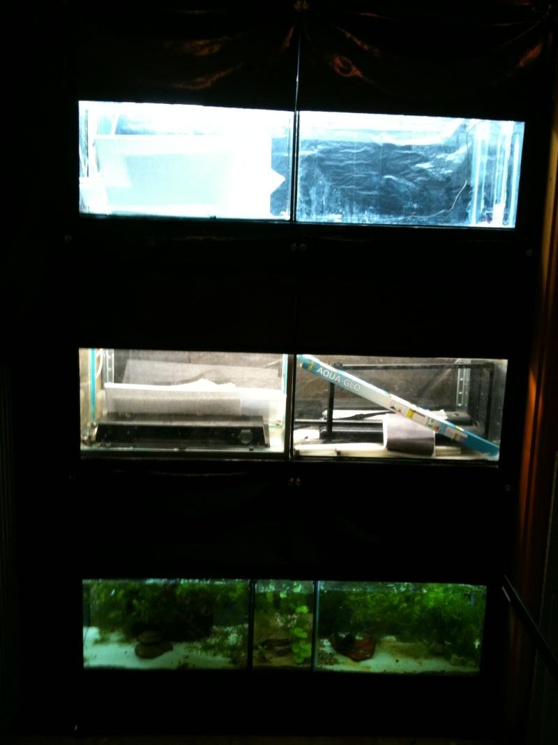 Mon hlm poissons for Poisson aquarium 60l
