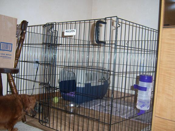 Puppy Weaning Setup