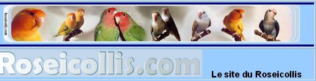 Site de Jean-Luc BOYER sur le Roseicollis
