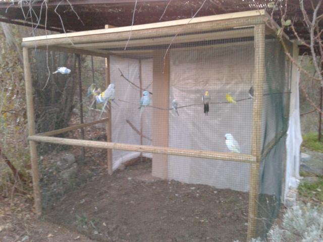 Voli re ext rieure un d but sans fin for Fabrication cage oiseaux exterieur