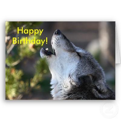 joyeux anniversaire chien loup