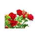 http://i74.servimg.com/u/f74/17/31/45/04/jardin10.png