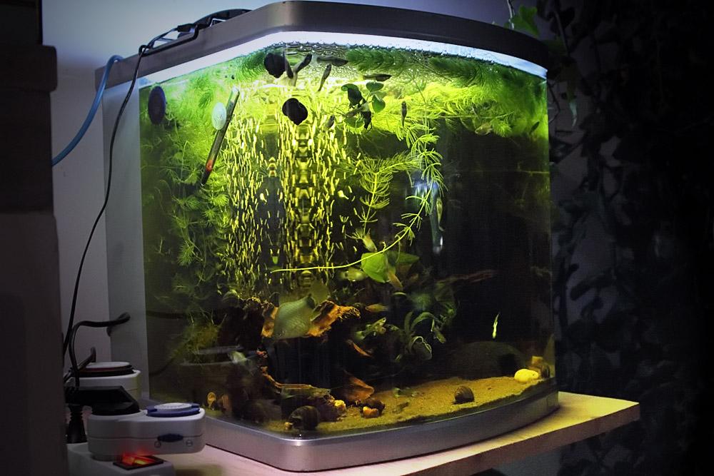 Bac vendre disponible sous une semaine 10 jours for Bac a poisson 500l