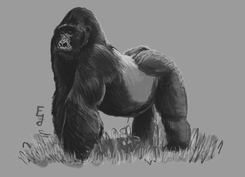 gorill10.jpg