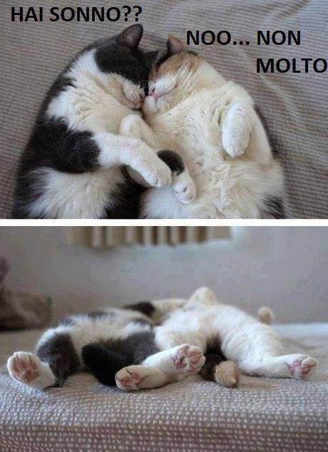 Lunedi 39 30 settembre salutiamoci in questa sezione for Buongiorno con gattini