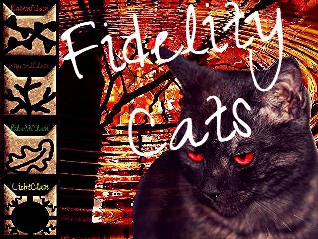 Fidelity Cats