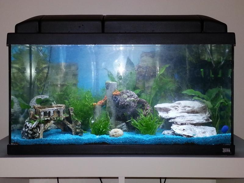 mon premier aquarium 70l. Black Bedroom Furniture Sets. Home Design Ideas