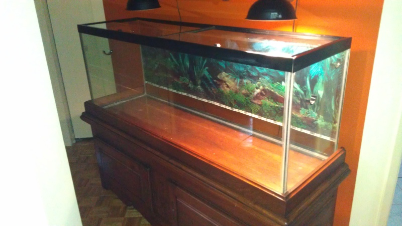 Meuble aquarium 100 x 30 65 gallon terrarium dimensions for Meuble aquarium 100 x 30