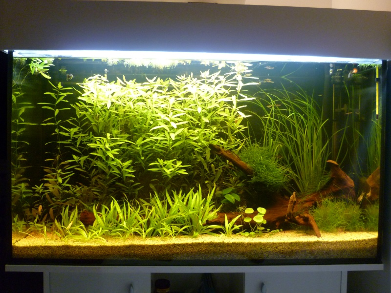 Aquarium 20l pas cher for Aquarium pas cher 50l