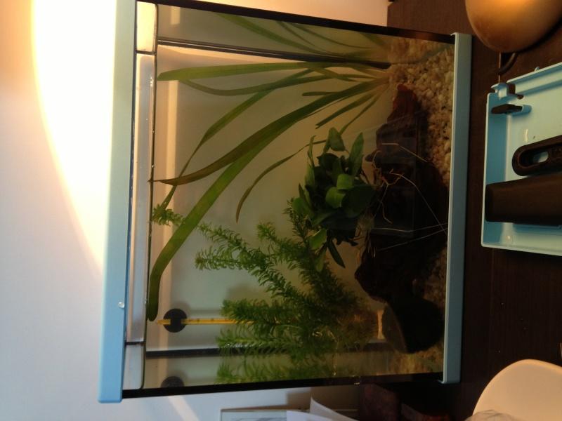 l 39 aquarium 10 litres pour mon futur combattant. Black Bedroom Furniture Sets. Home Design Ideas