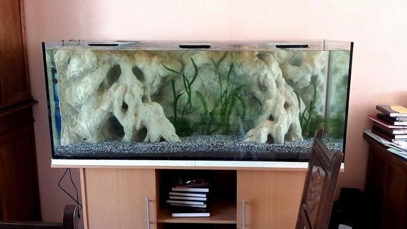 Nouvel aquarium d 39 occasion de 500 litres page 2 for Aquarium 50 litres occasion